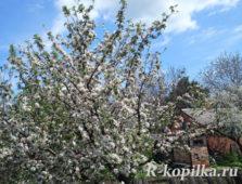 Садовые и огородные работы