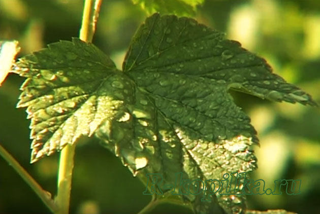 Некорневая подкормка растений