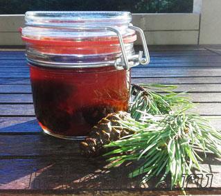 Рецепт варенья из шишек сосны
