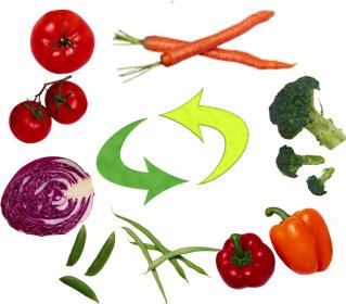 Предшественники овощных культур таблица