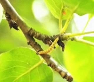 Средства защиты растений от вредителей и болезней