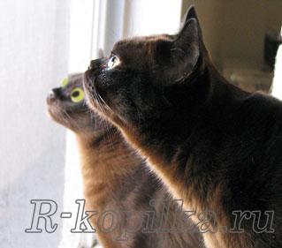 Ушной клещ у кошек лечение в домашних условиях