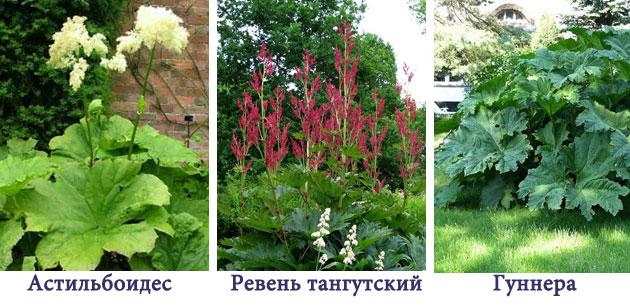 Архитектурные растения в дизайне сада