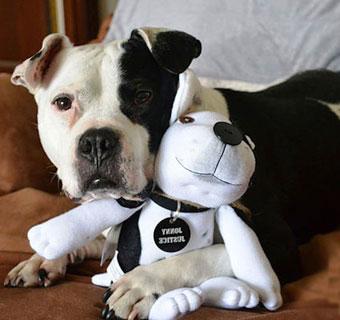 Как удалить слезные дорожки у собак