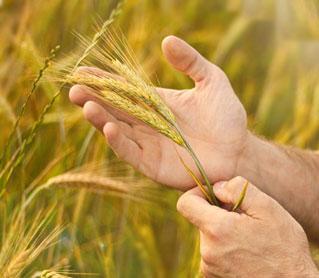 Как прорастить семена для еды