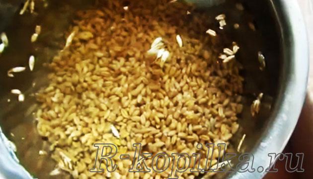 Как прорастить пшеницу дома