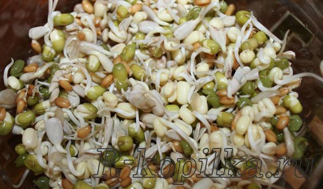 Проращивание пшеницы в домашних условиях