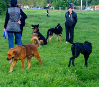 как защититься от собак на улице