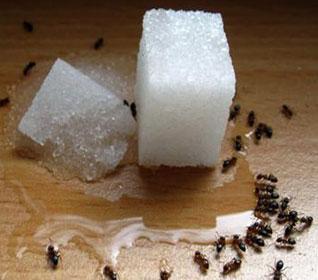 Народные средства от муравьев в доме или как избавиться от домашних муравьев навсегда