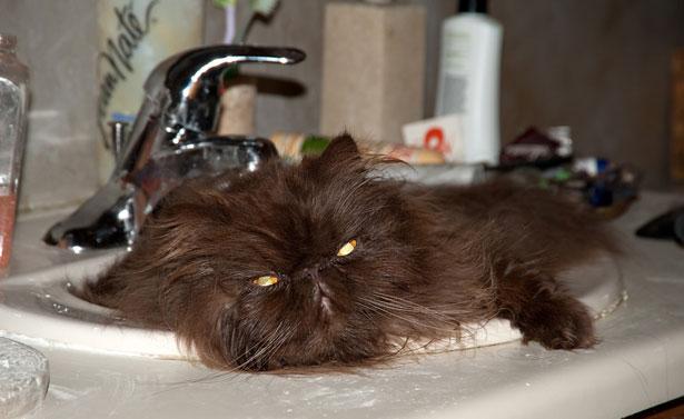 Аллергия на кошек что делать