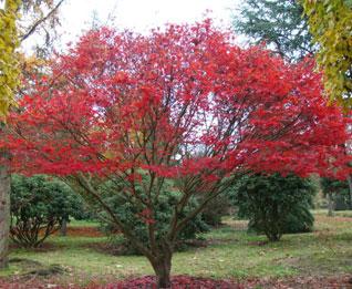 роль деревьев в саду