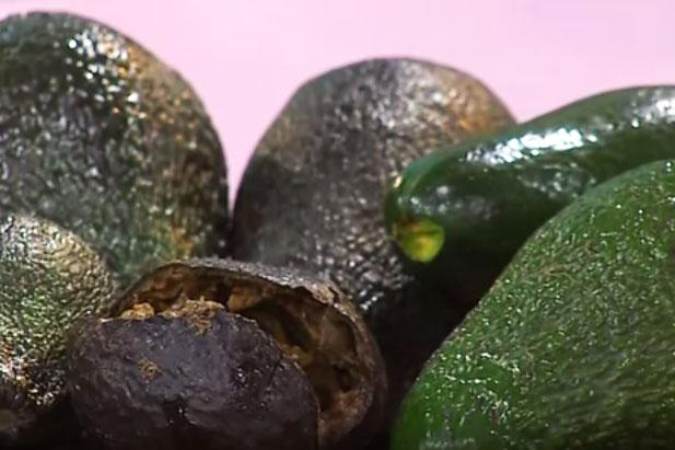 как хранить авокадо чтобы оно дозрело