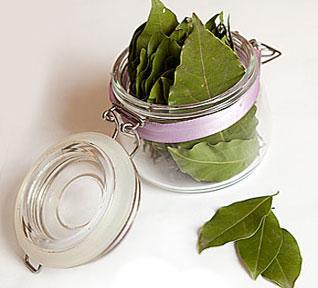 лечение лавровым листом суставов в домашних условиях