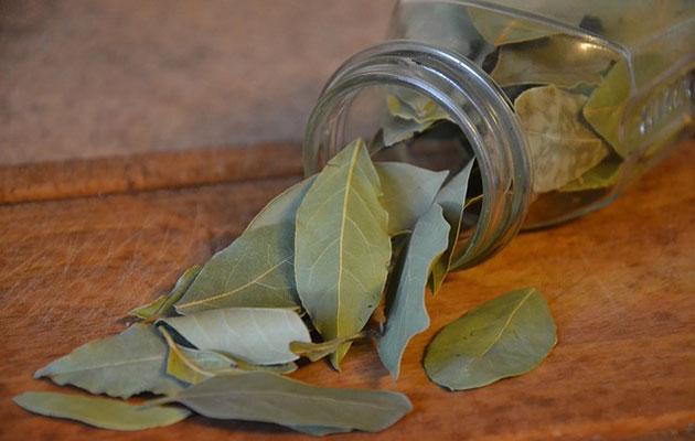 как лечить лавровым листом суставы