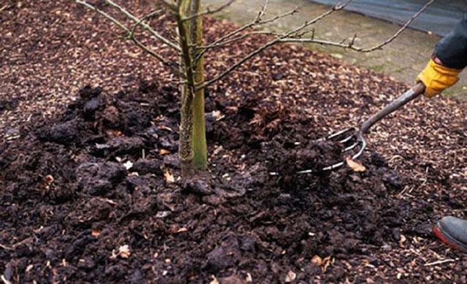 внесение удобрений весной под плодовые деревья и кустарники