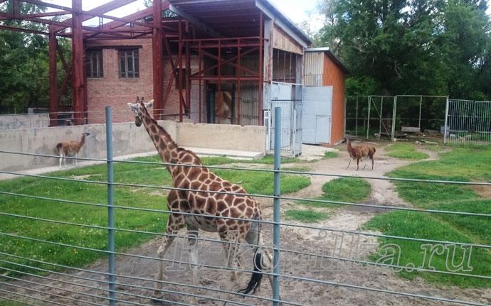 Какие животные есть в ростовском зоопарке фото