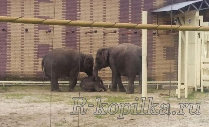 вольер со слонами
