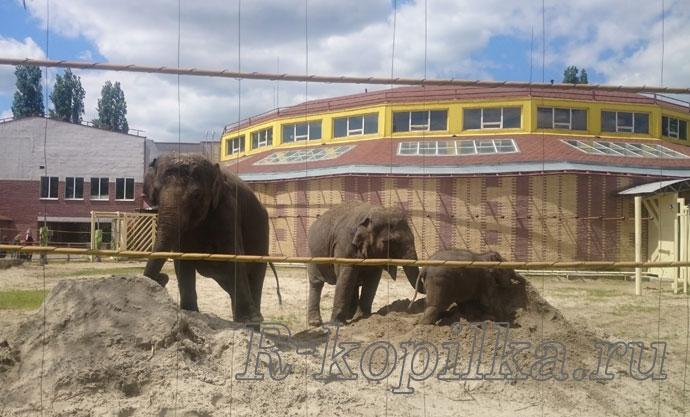 семья слонов в песочнице
