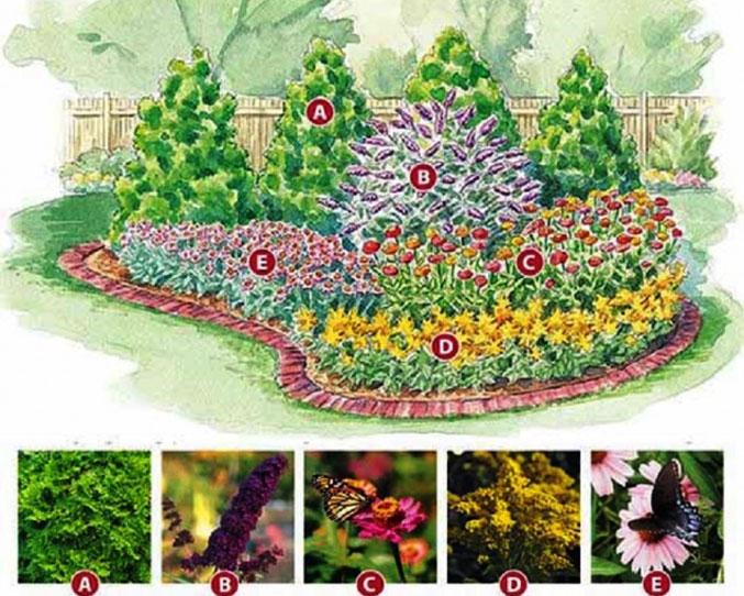 Клумбы с хвойниками и цветами: схемы фото