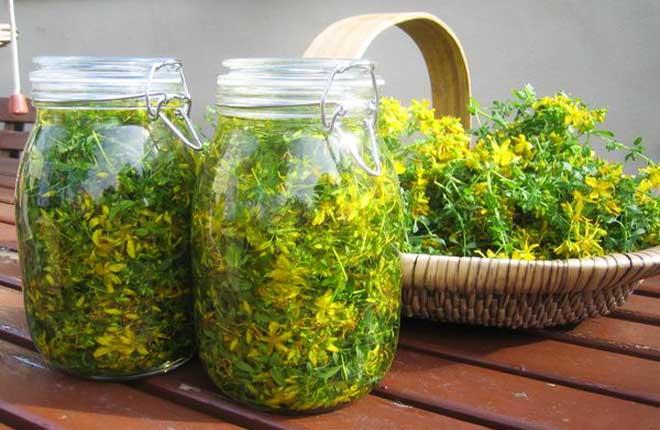 трава зверобоя лечебные свойства и противопоказания