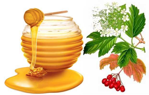 польза калины с медом