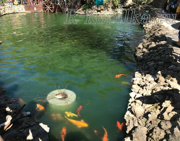 пруд с рыбами