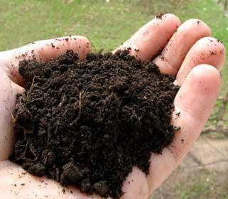 как узнать кислотность почвы на участке