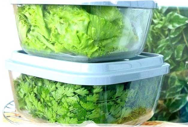 заморозка зелени на зиму в домашних условиях