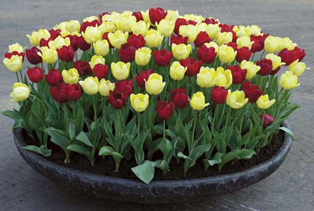 переносные клумбы для цветов