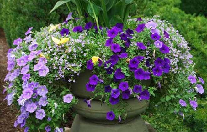 что посадить в контейнеры в саду