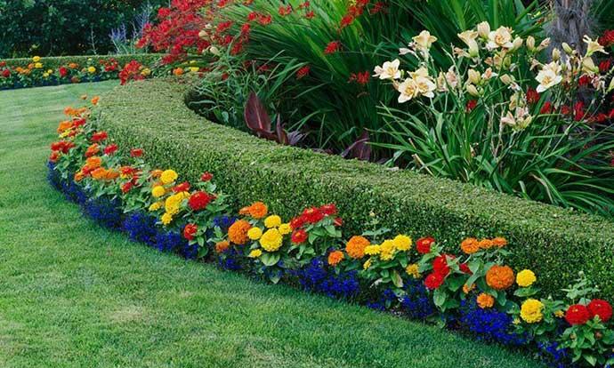 Живые изгороди в ландшафтном дизайне в средней полосе