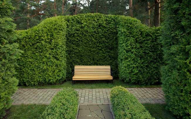 зеленая стенка из растений