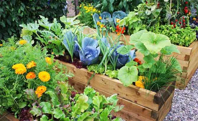 как сделать клумбу из овощей и цветов