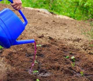азотные удобрения для клубники весной